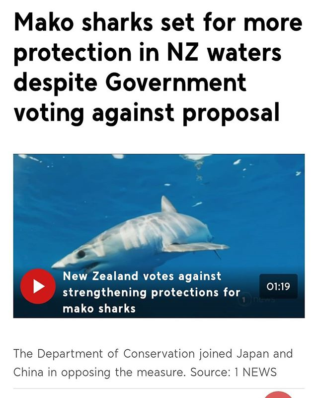 I'm sorry New Zealand I do not believe DOC has represented the public interest here.  After listening to the CITES vote, I am blown away as to why the Department of Conservation is saying no, on behalf of NZ, that's us, to Mako shark protection. Their reasoning was that there's a few studies in other oceans that show there's a few million of them and because our ocean is bigger than theirs we must have at least a few more million. These numbers are based on poor data, and we'll it's appears like childhood maths being extrapolated, and yet when the DOC representative actually tries to tie some numbers from the work done in NZ, she says that Mako numbers have gone up.  Please look at the next image which is the end line of summary, from the NZ fisheries report, with which this 'increasing' data being talked about, comes from. If it is not the most self contradicting statement you have ever read, I would be surprised. Point being we have poor data to manage these animals. It's biased, under reported and even acknowledged so. Yet for some reason our very own department of CONSERVATION, is arguing that an apex predator proven to have shown levels of decline globally, is not worth protecting, But WHY? What are we losing in providing such protection. I don't think the NZ public loses. I don't think the ecosystem loses. All I could assume is financial loss to those who exploit it. So I ask again, when 72% of the global voice said yes, why are we, NZ, being represented as saying No. Especially when the reasoning is so horrifically poor. Our representative even tried to say that because the Mako is a highly  migratory species it is likely everywhere. Shocking language. This is a specific ecological trait that makes them vulnerable to unregulated  international and high sea exploitation and thus they need international protection, hence CITES listing. Wow. I am blown away here.  Are you a kiwi? What's your thoughts? If not a kiwi, does this seem to represent who you think NZers are?