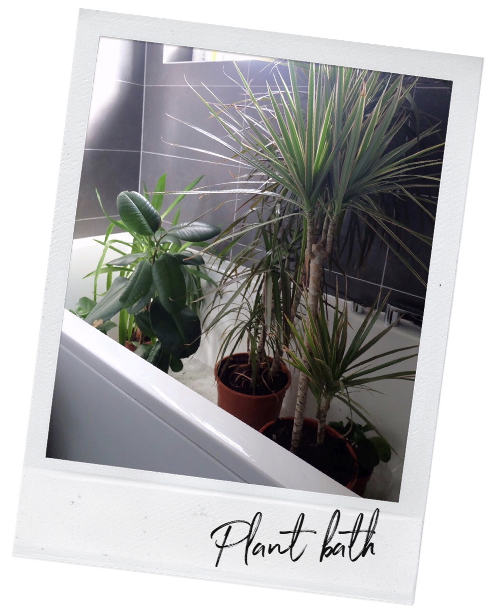 Real plant tips