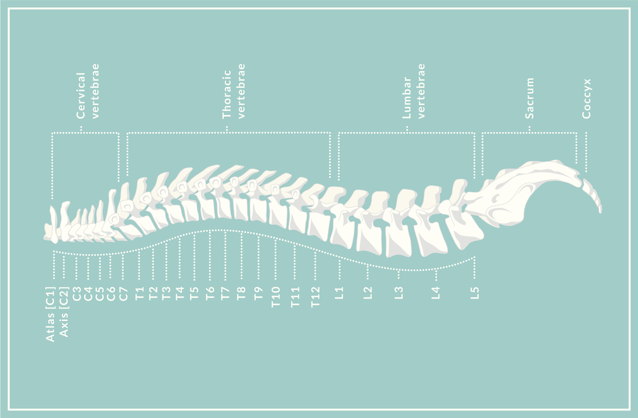 Letterkenny Chiropractic homepage spine
