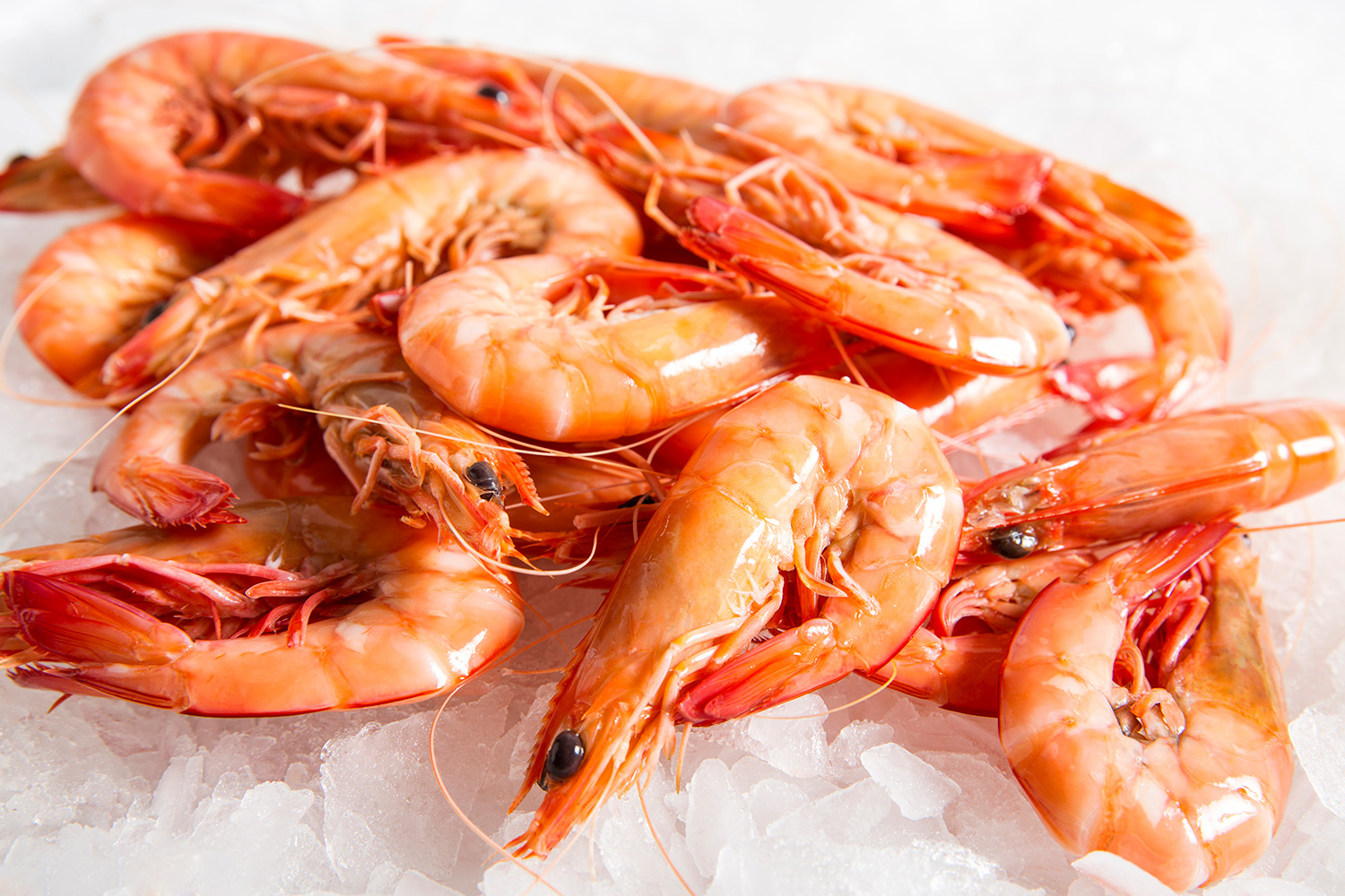 Ocean-King-Prawns-Cooked-Small.jpg