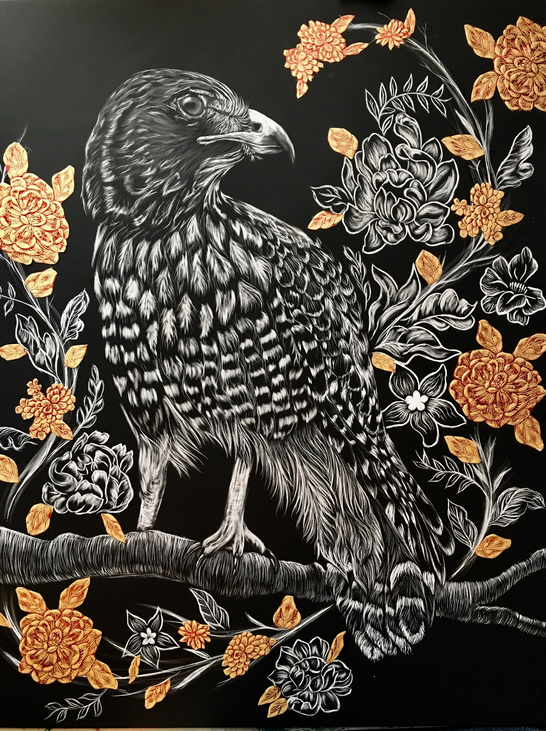 """Red-tailed Hawk"" 2018  Scratchboard 16""x20"""