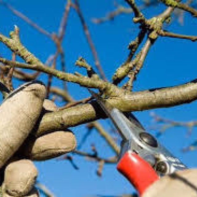 February is great time to prune!! #think spring #brentwood