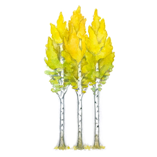 image: watercolor painting of three aspen trees in fall foliage