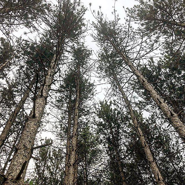 Trees, but make it fashion 😉🍃 . #hudsonvalley #upstateny #treesontrees #treeporn #naturetherapy #weekendexploration #theseareafewofmyfavoritethings