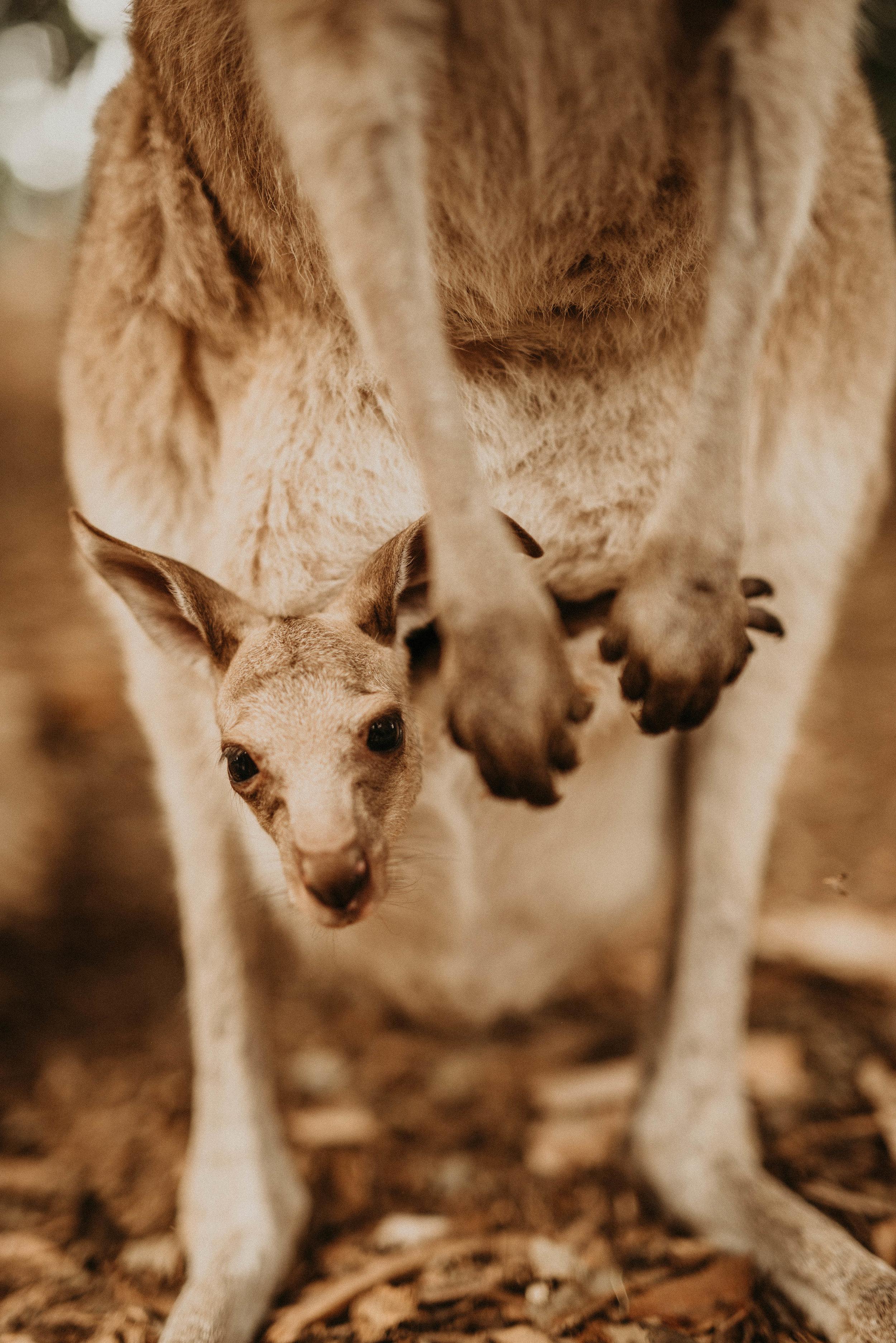 australia-3.jpg
