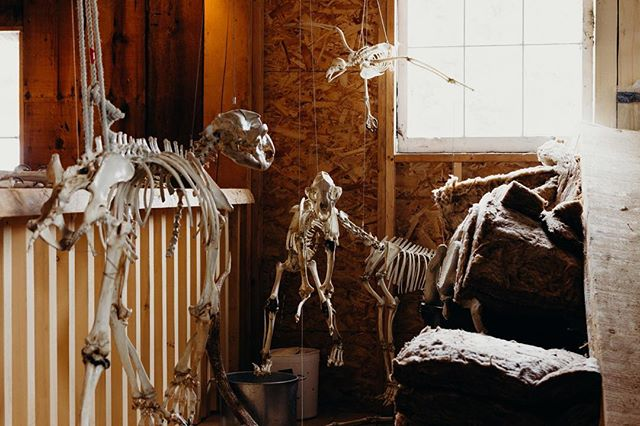 Spooktober is upon us ••• Articulated #skeletons at the Telegraph Cove Whale Interpretive Centre