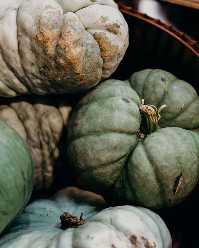 Squad gourds 🎃 💚 #pumpkins #clickinwalk2018 #ssdgm