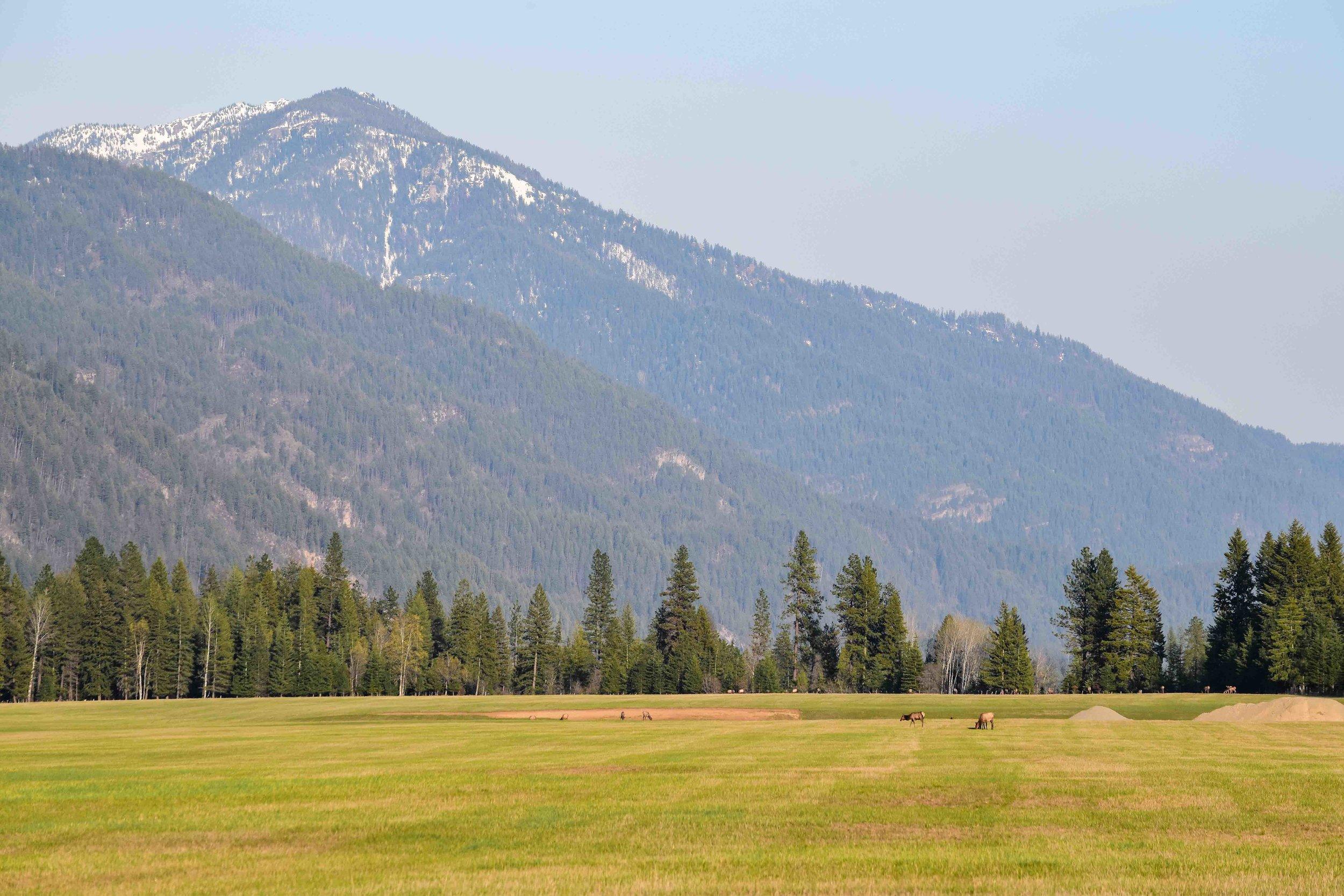 Grazing Elk, Montana/Idaho Line