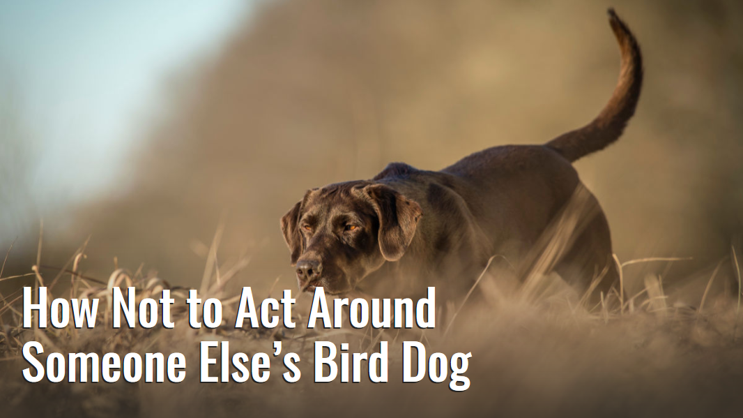 Screenshot_2019-10-29 How Not to Act Around Someone Else's Bird Dog.png