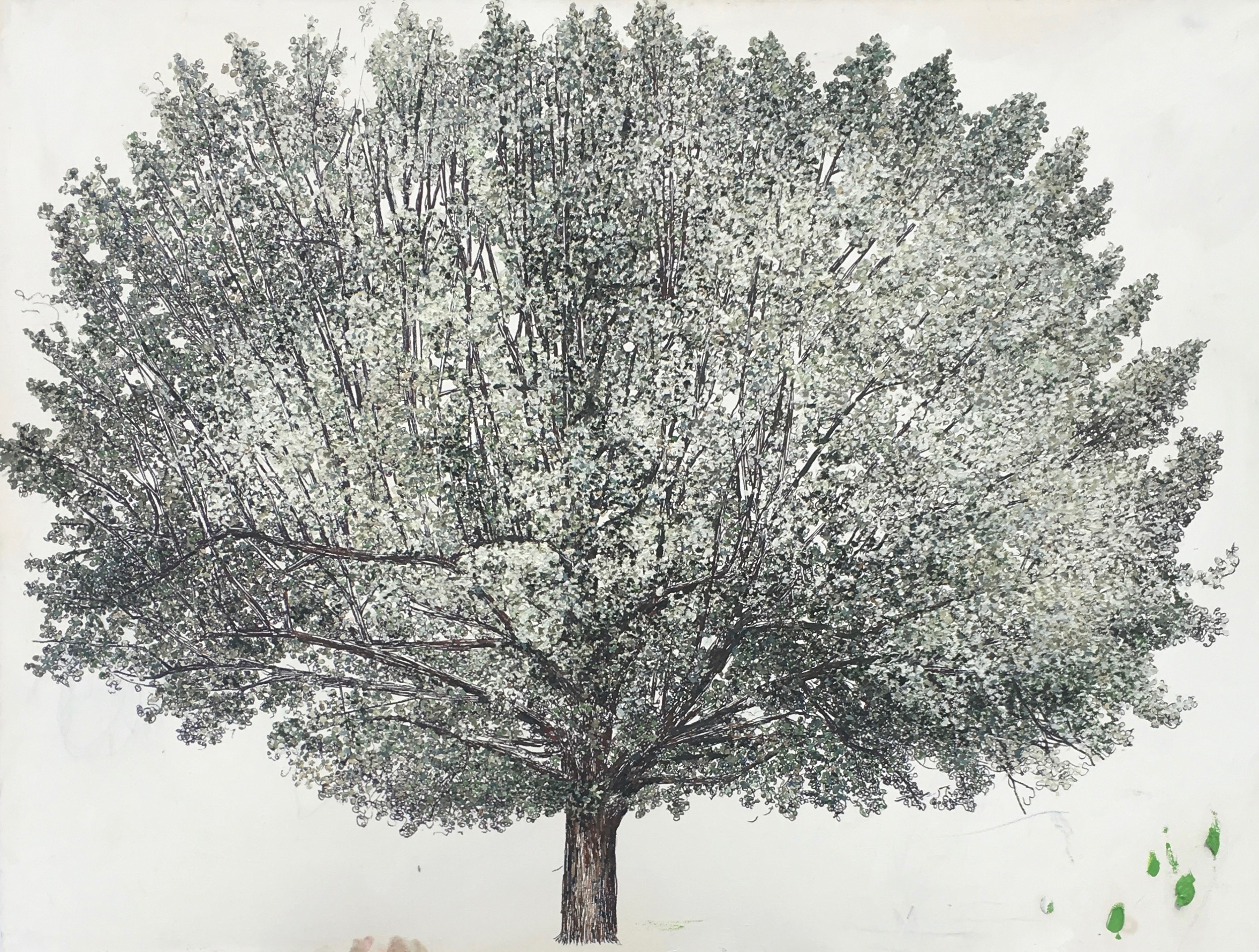 Linden Tree. 36 48 in. Ink and oil on canvas. 2019.