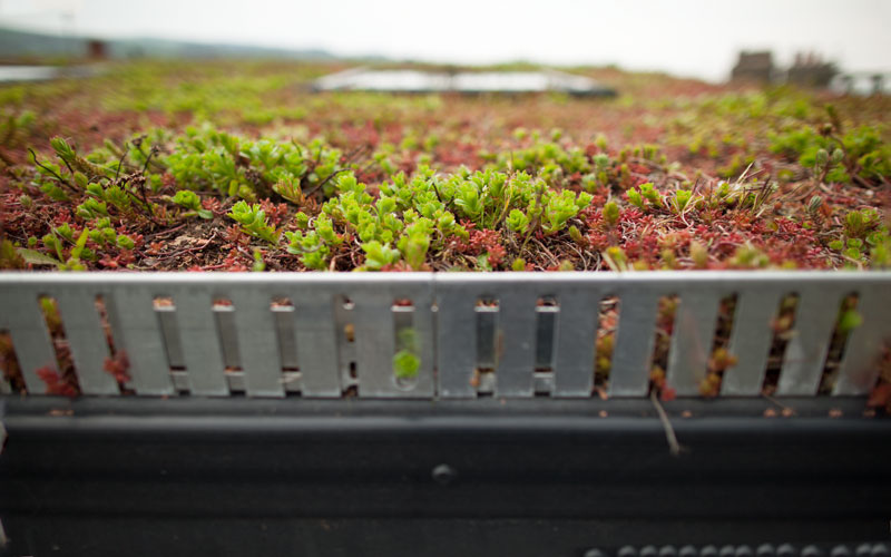 Spacetwo's very own Green roof!
