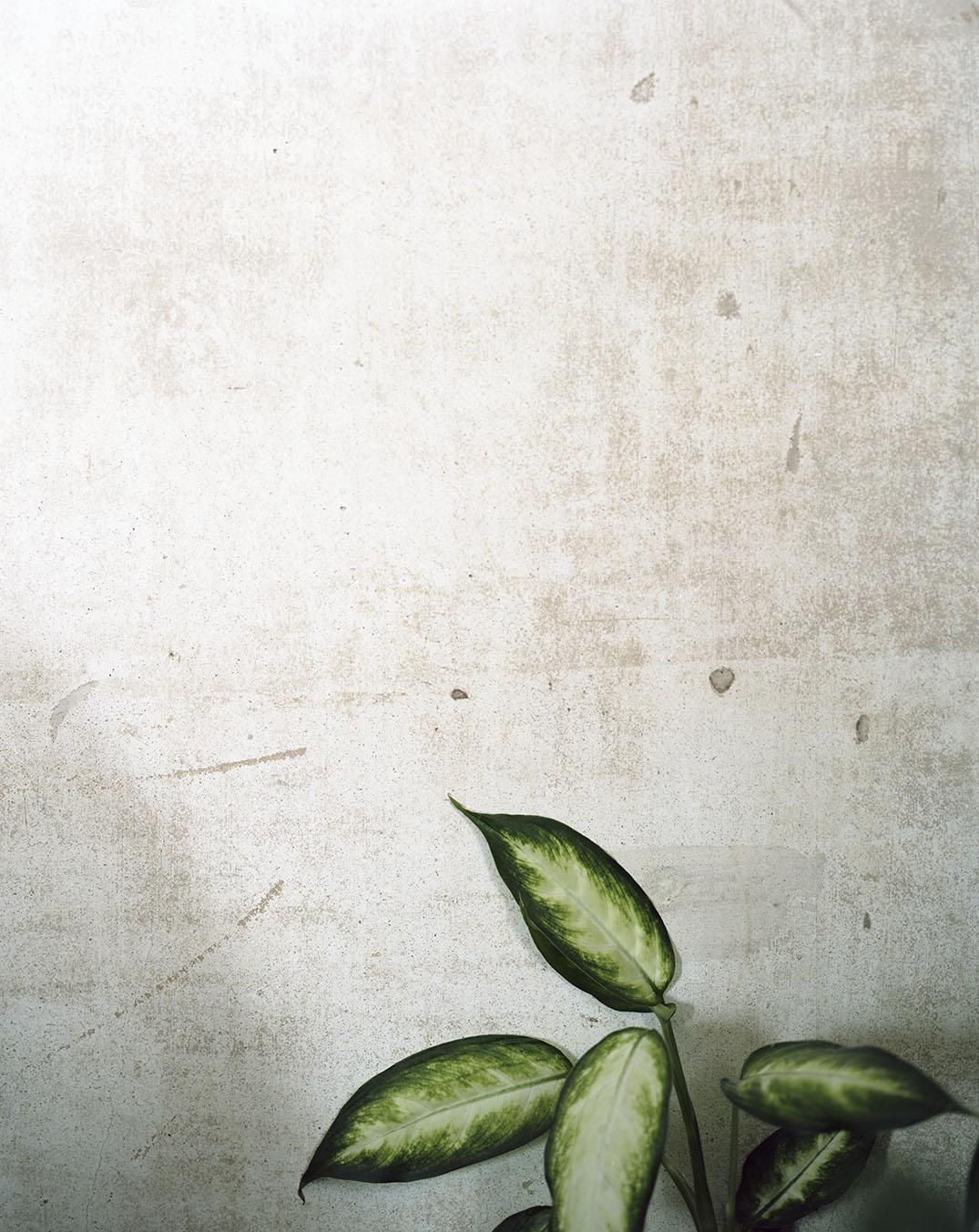 plant-onwall-work.jpg