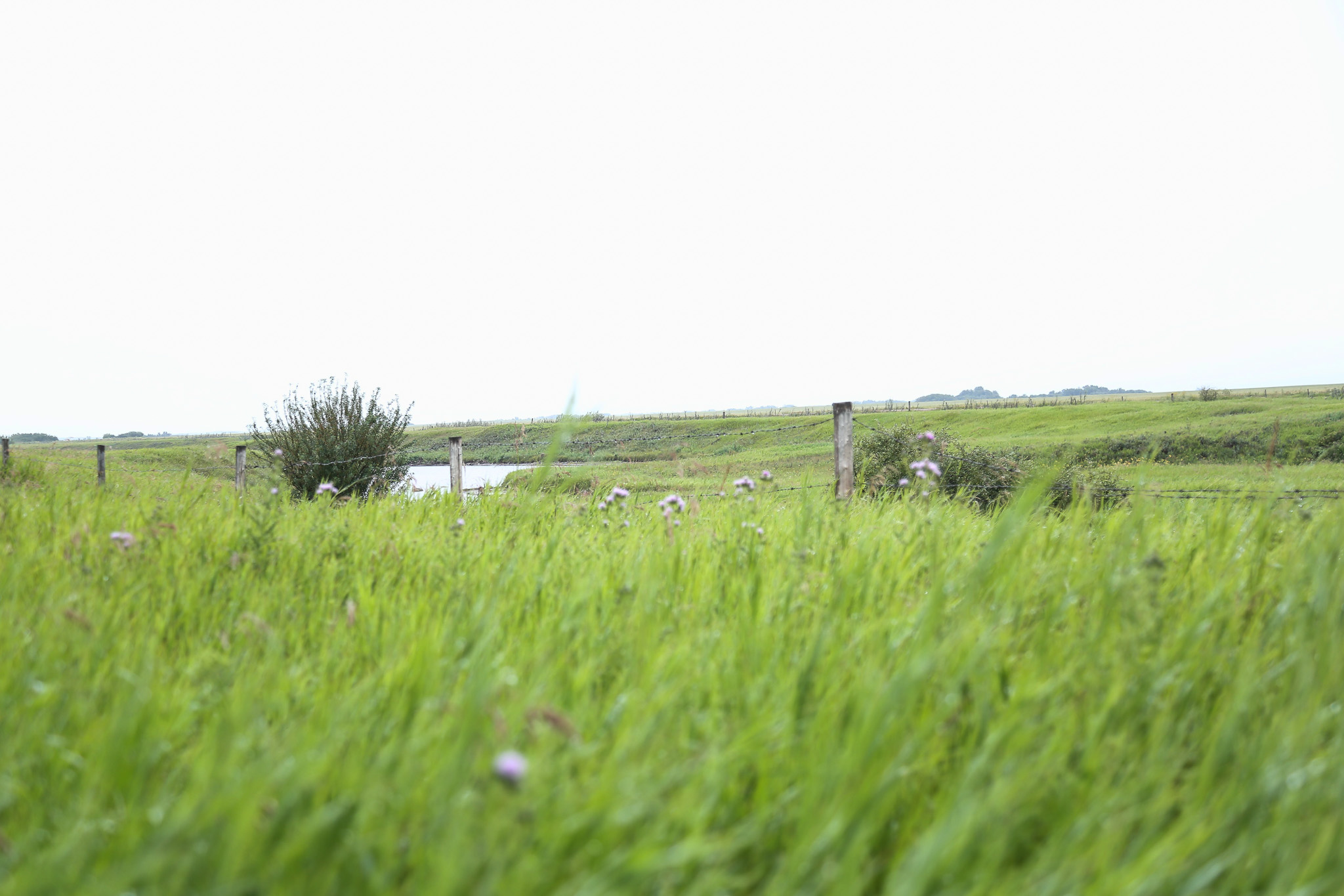 Green grassy prairies in July