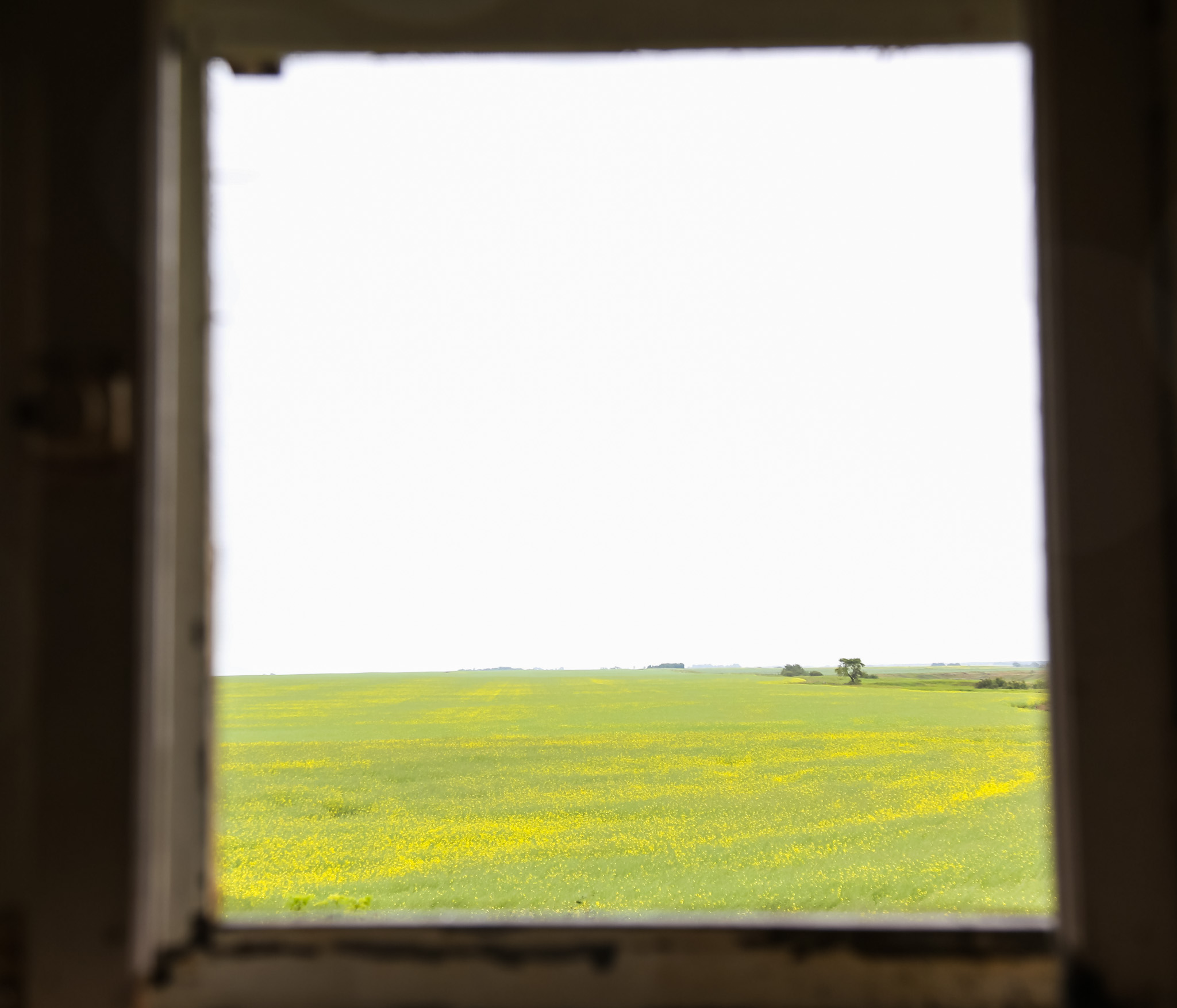 Another room with a view of the surrounding Canola fields