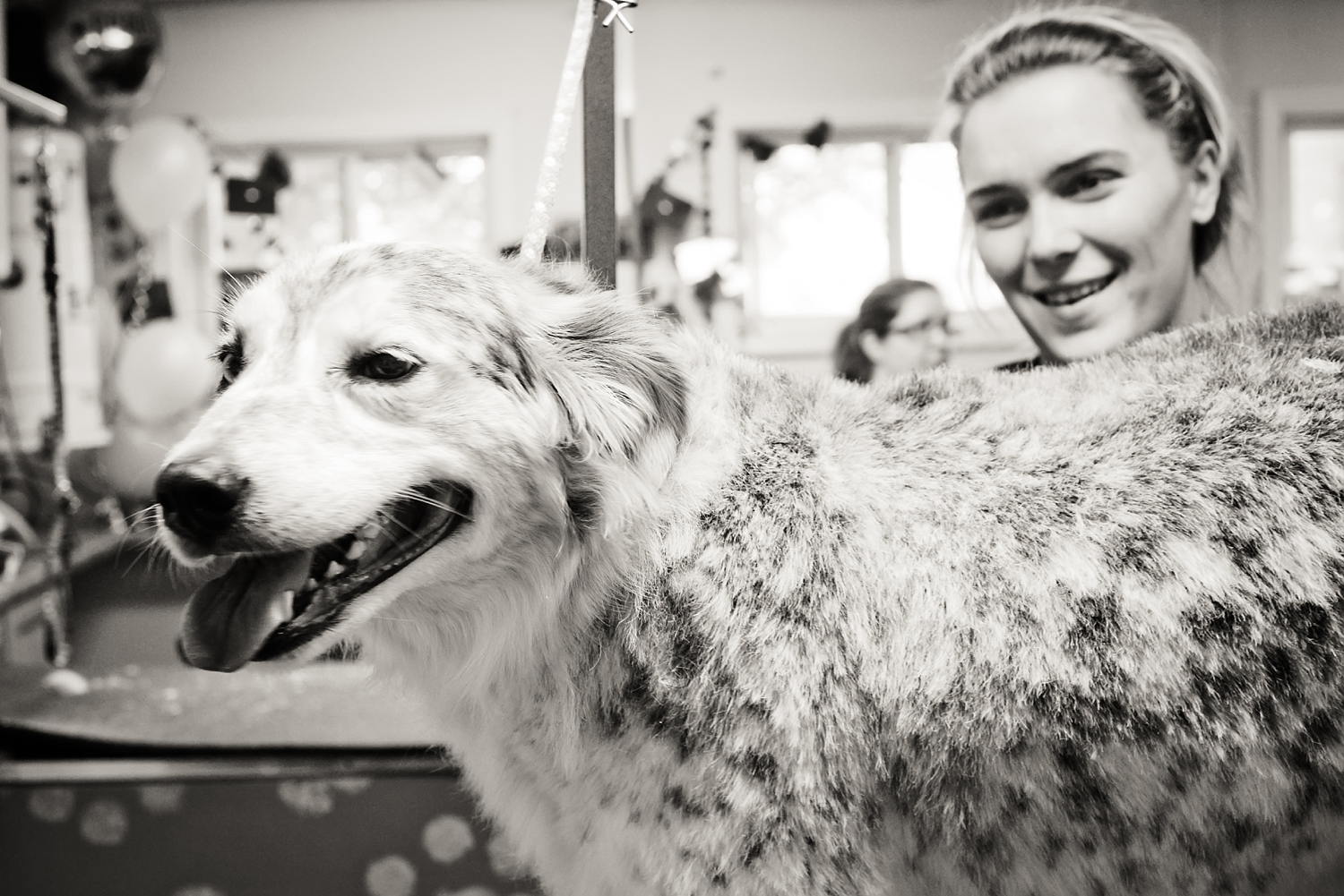 Columbia, MO pet grooming and boarding | The Pet Fair