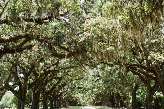 Boone Hall Plantation by Deborah Zoe Photography.