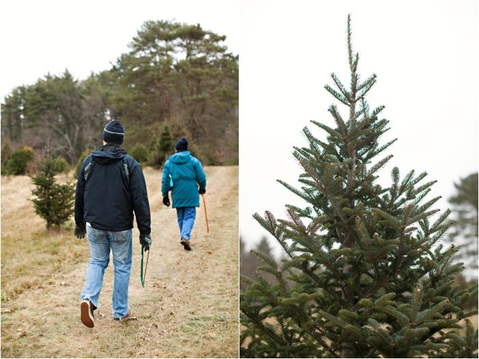 nutter christmas tree farm deborah zoe photography deborah zoe blog boston wedding photographer0004.JPG