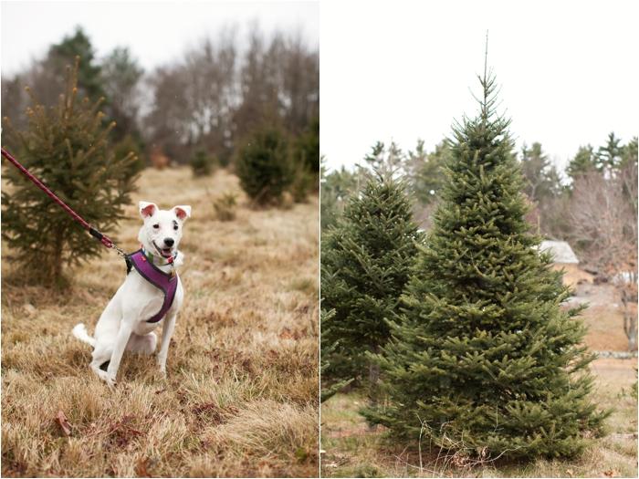 nutter christmas tree farm deborah zoe photography deborah zoe blog boston wedding photographer0006.JPG