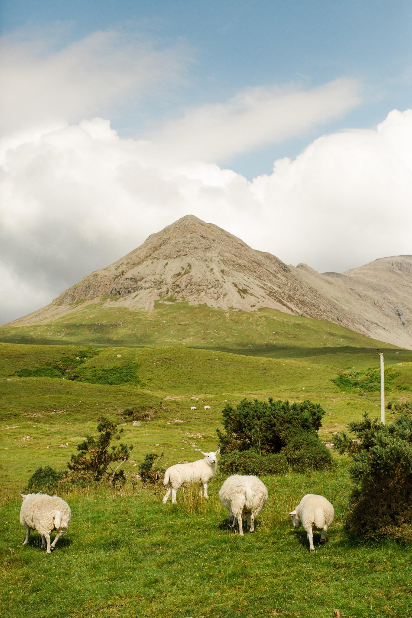 scotland_highlands_deborah_zoe_0080.JPG