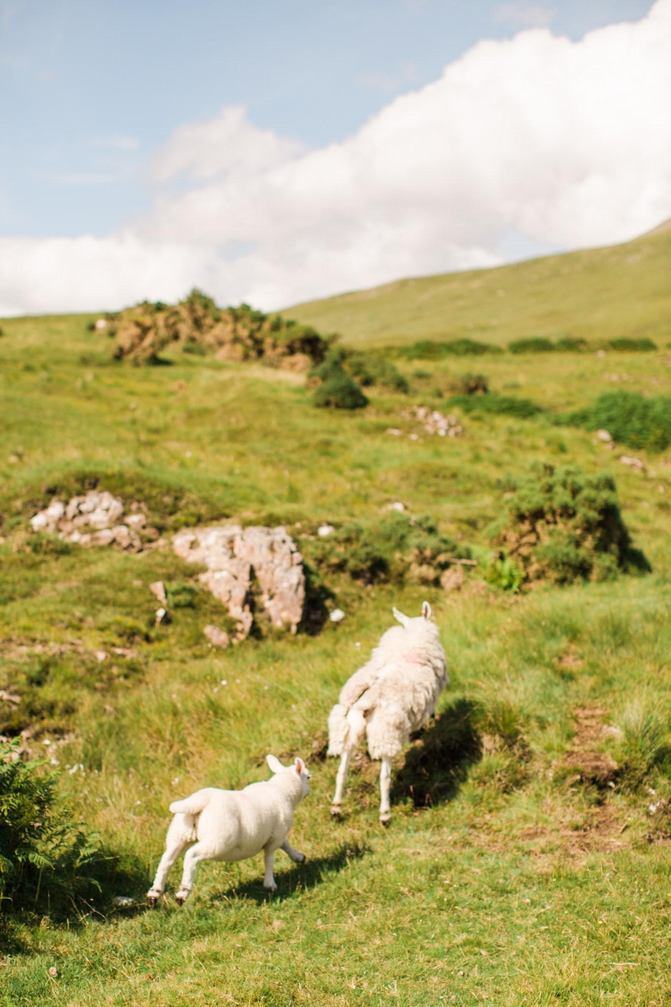 scotland_landscapes_deborah_zoe_photography_00002.JPG