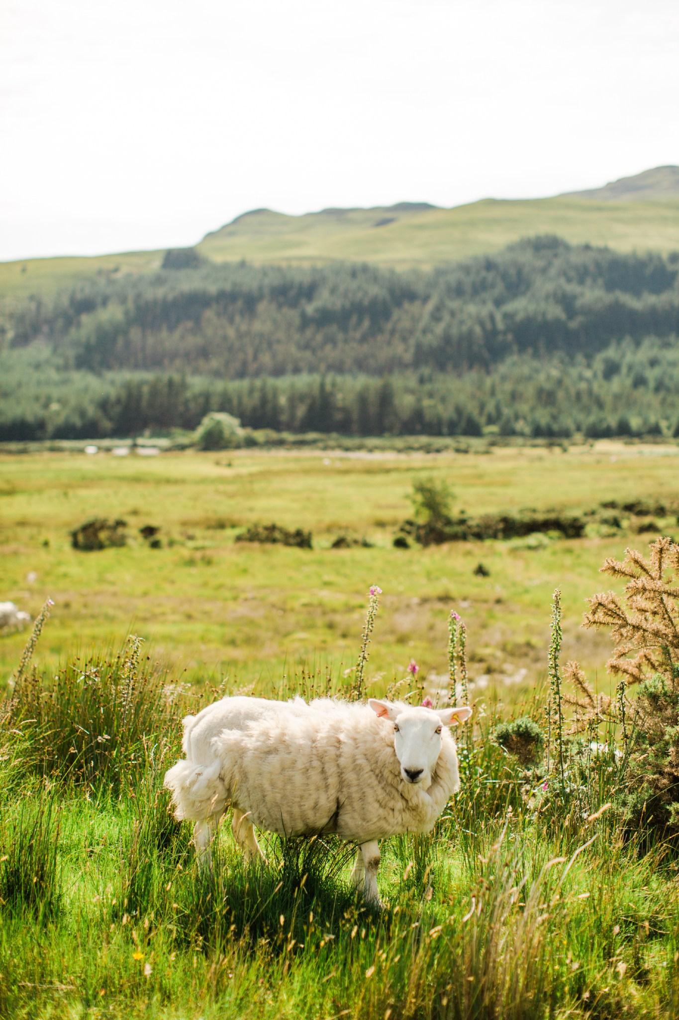 scotland_landscapes_deborah_zoe_photography_00006.JPG