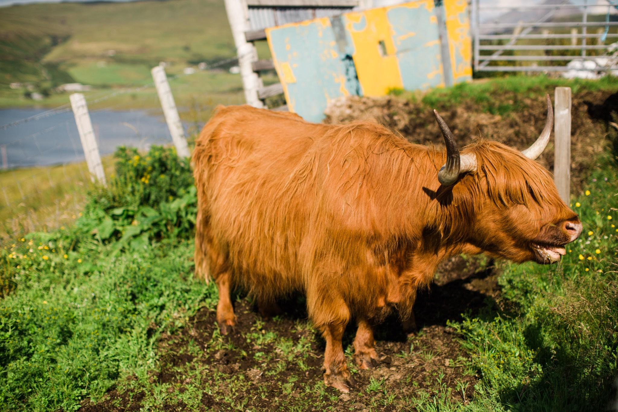 scotland_landscapes_deborah_zoe_photography_00008.JPG