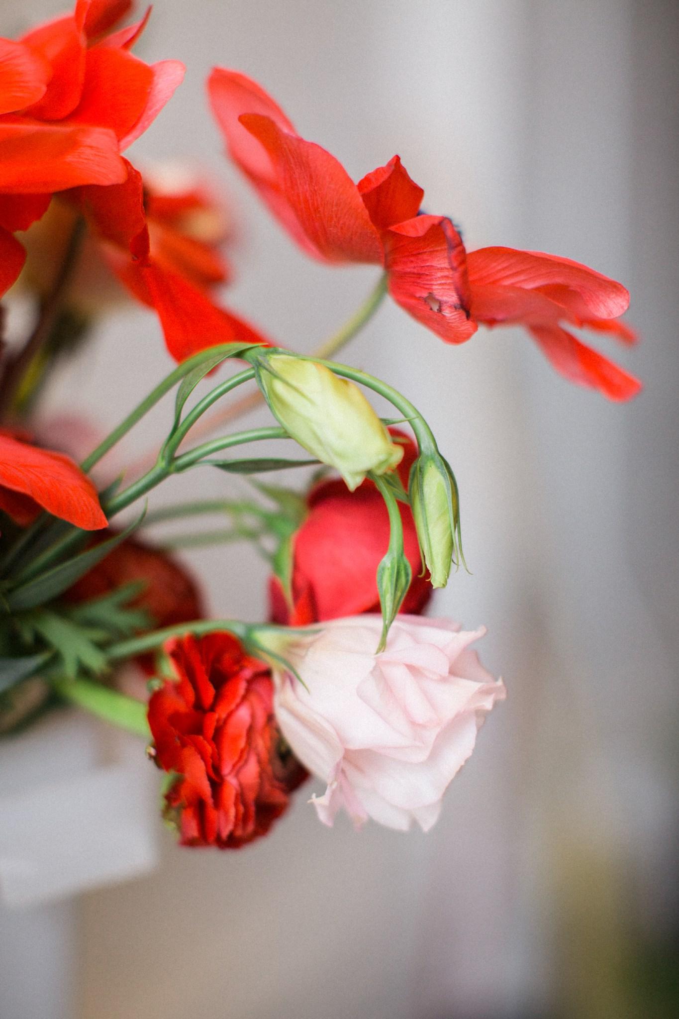 deborah_zoe_photography_best_of_flowers_2016_00027.JPG