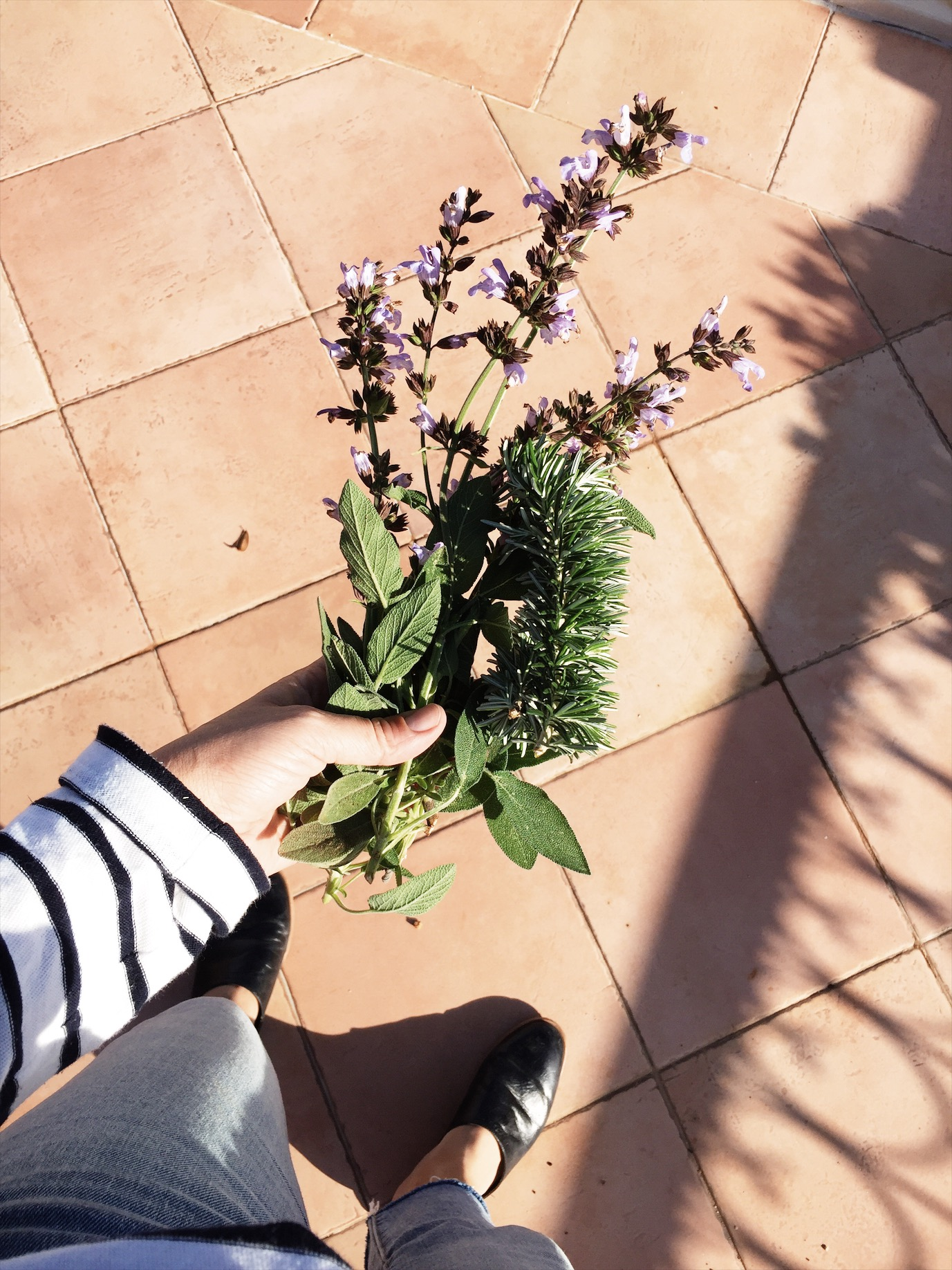 making my own smudge sticks from an organic sage and rosemary herb garden