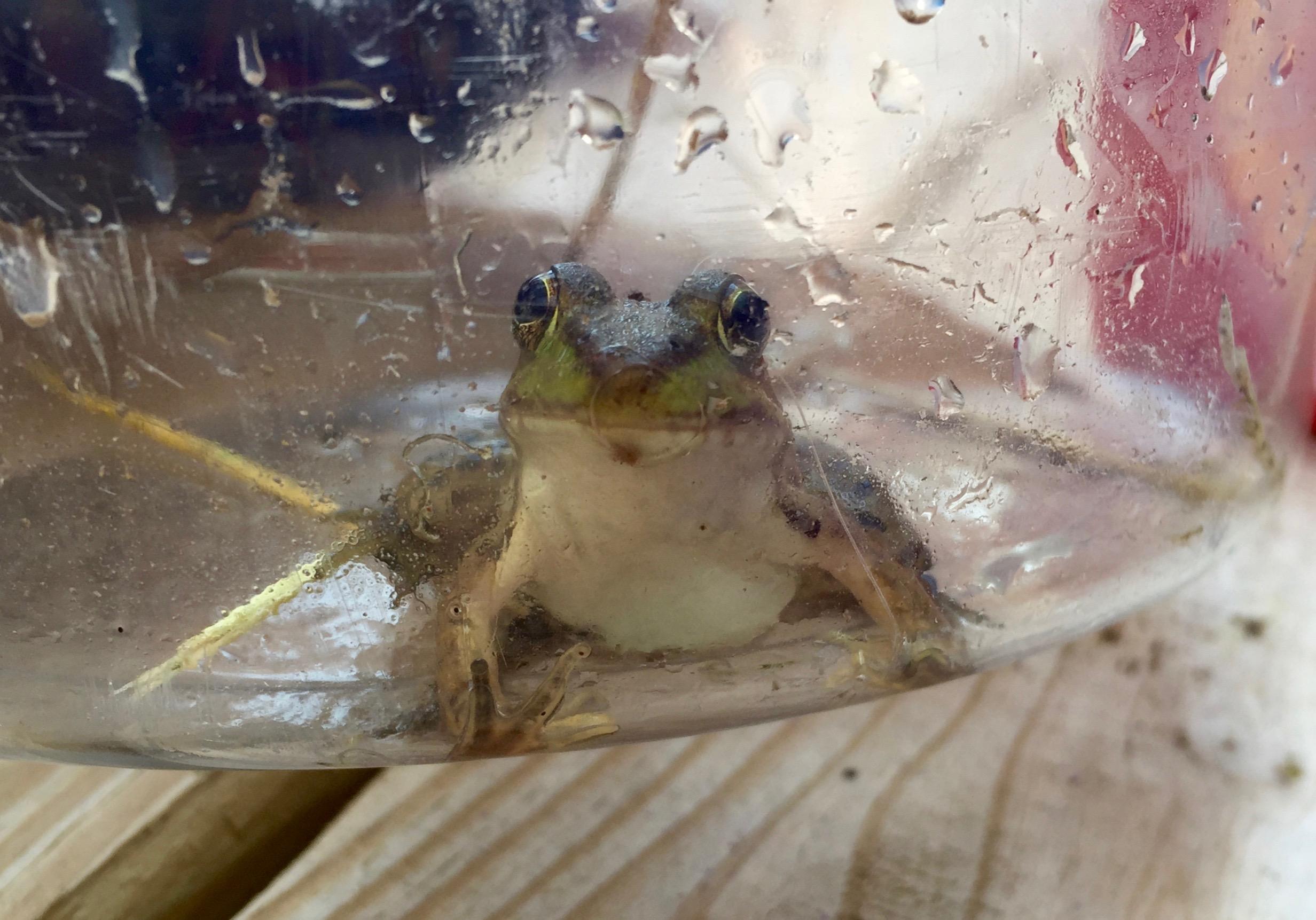 Happy frog!