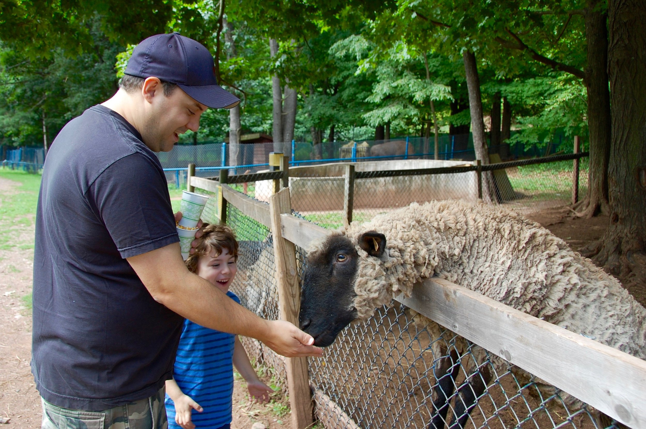 Bailiwick Ranch Zoo Sheep