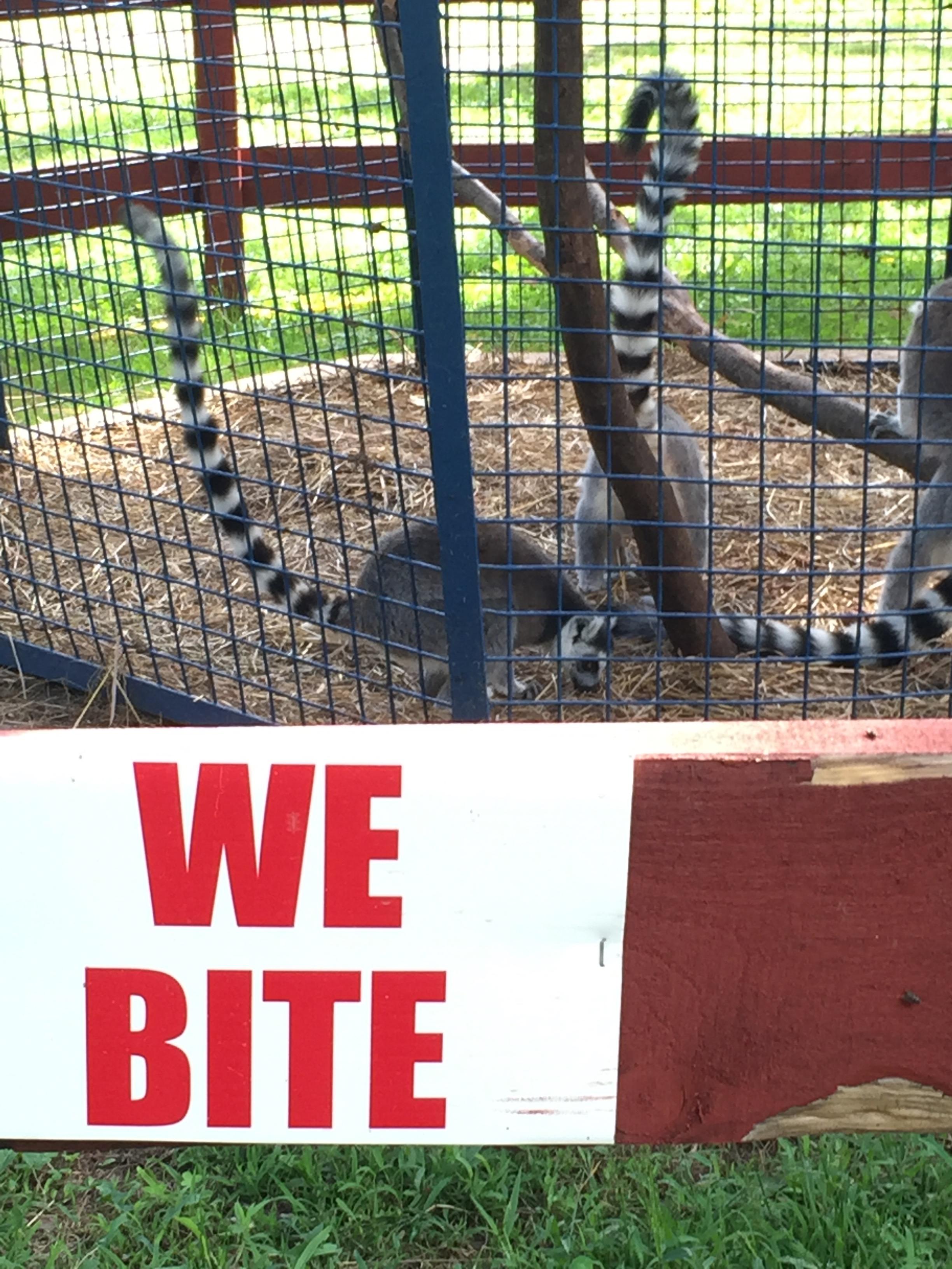 bailiwick ranch zoo lemurs