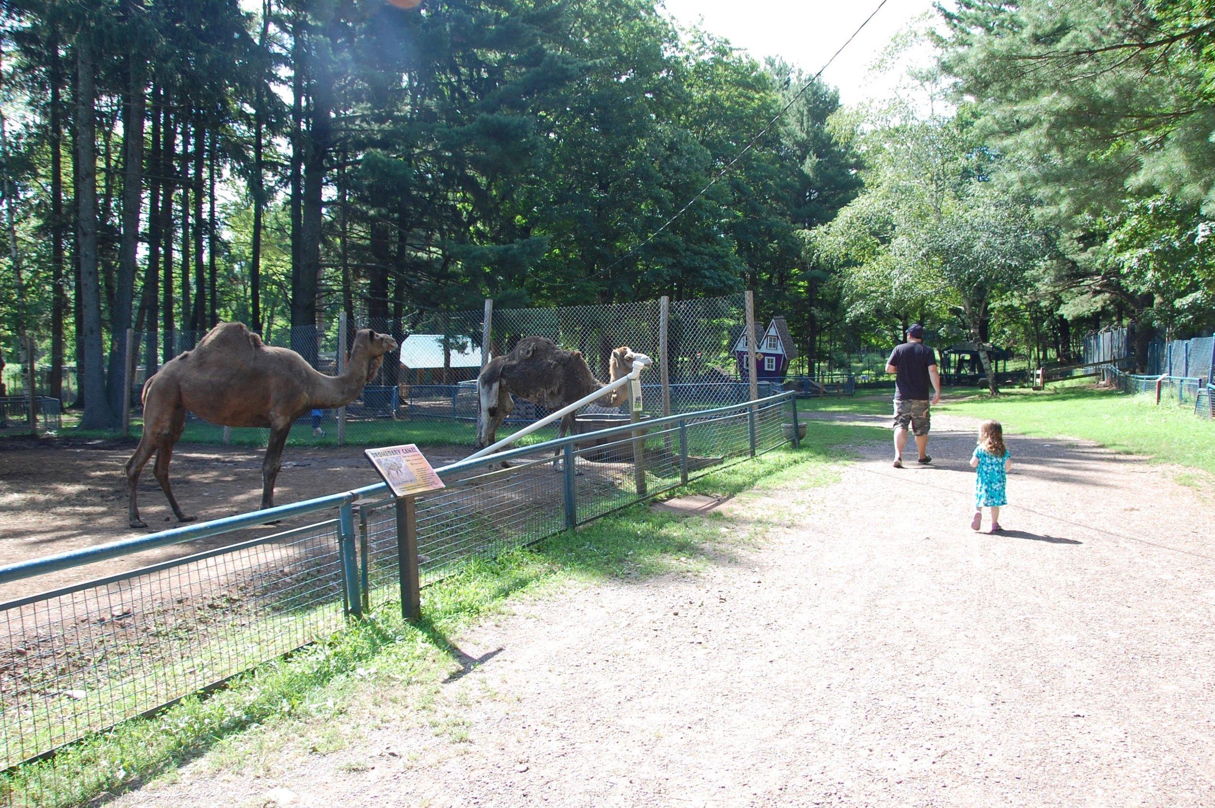 bailiwick ranch zoo safety