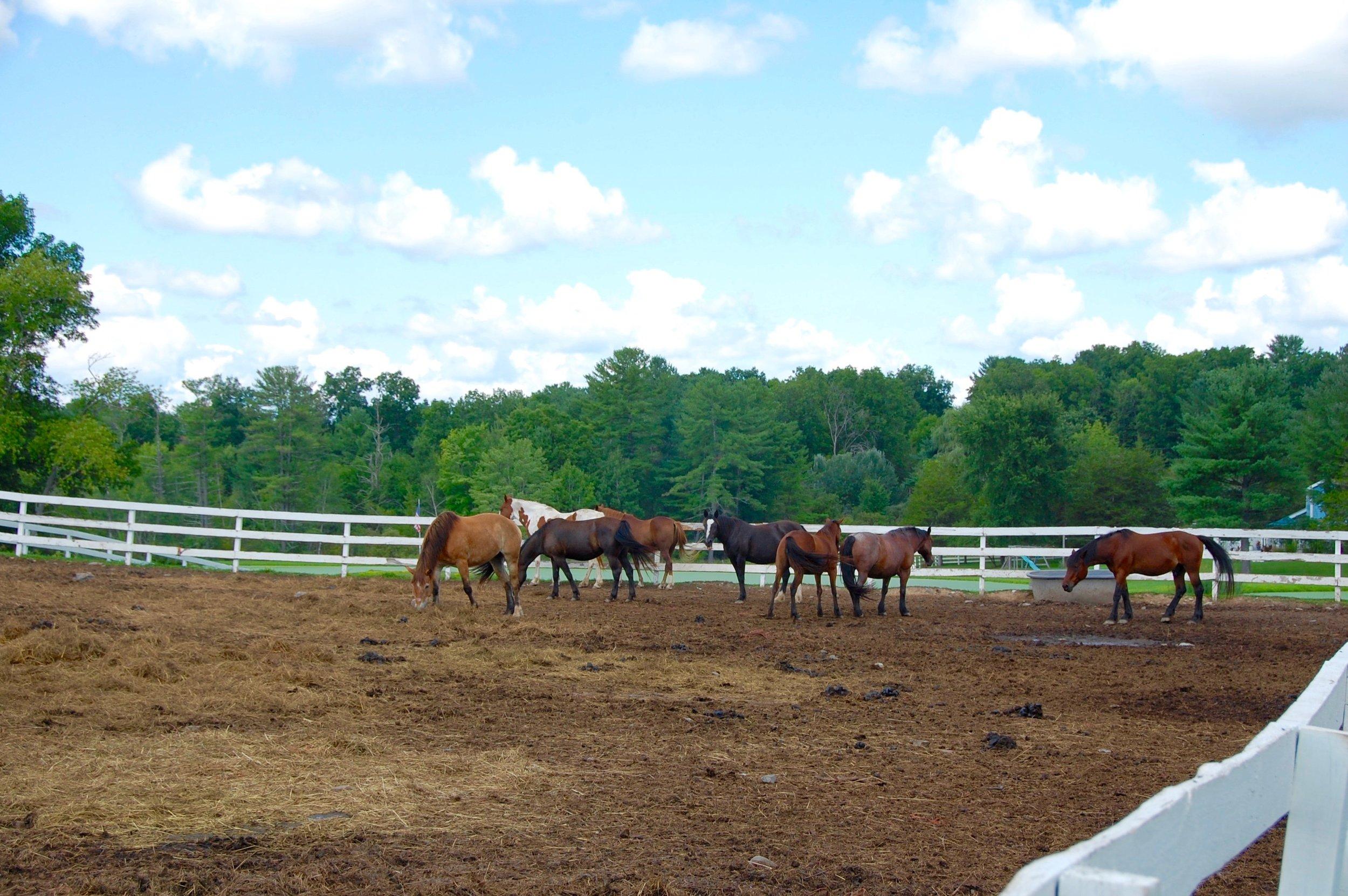 horseback riding in east durham, ny