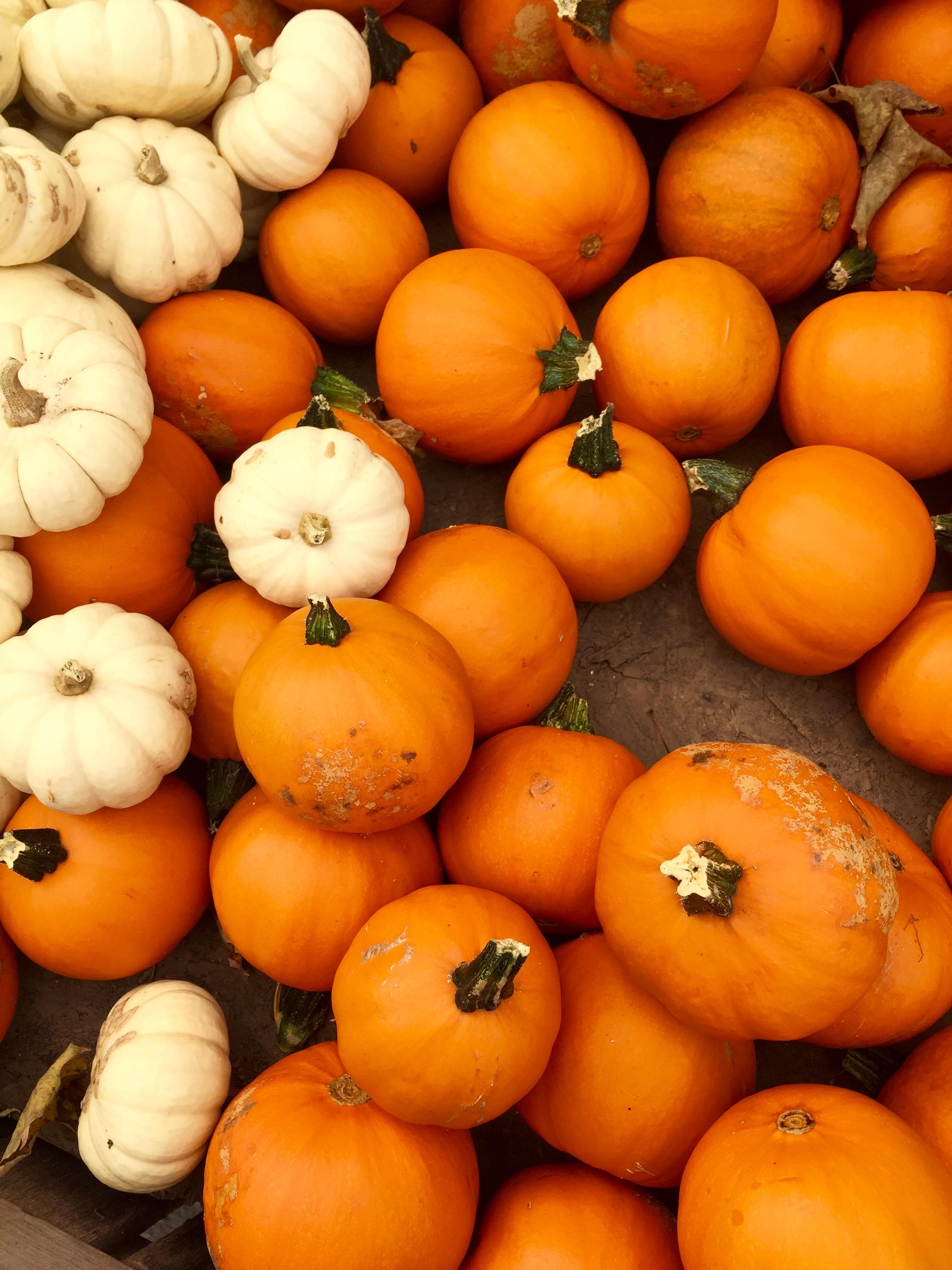 Story Farms mini pumpkins