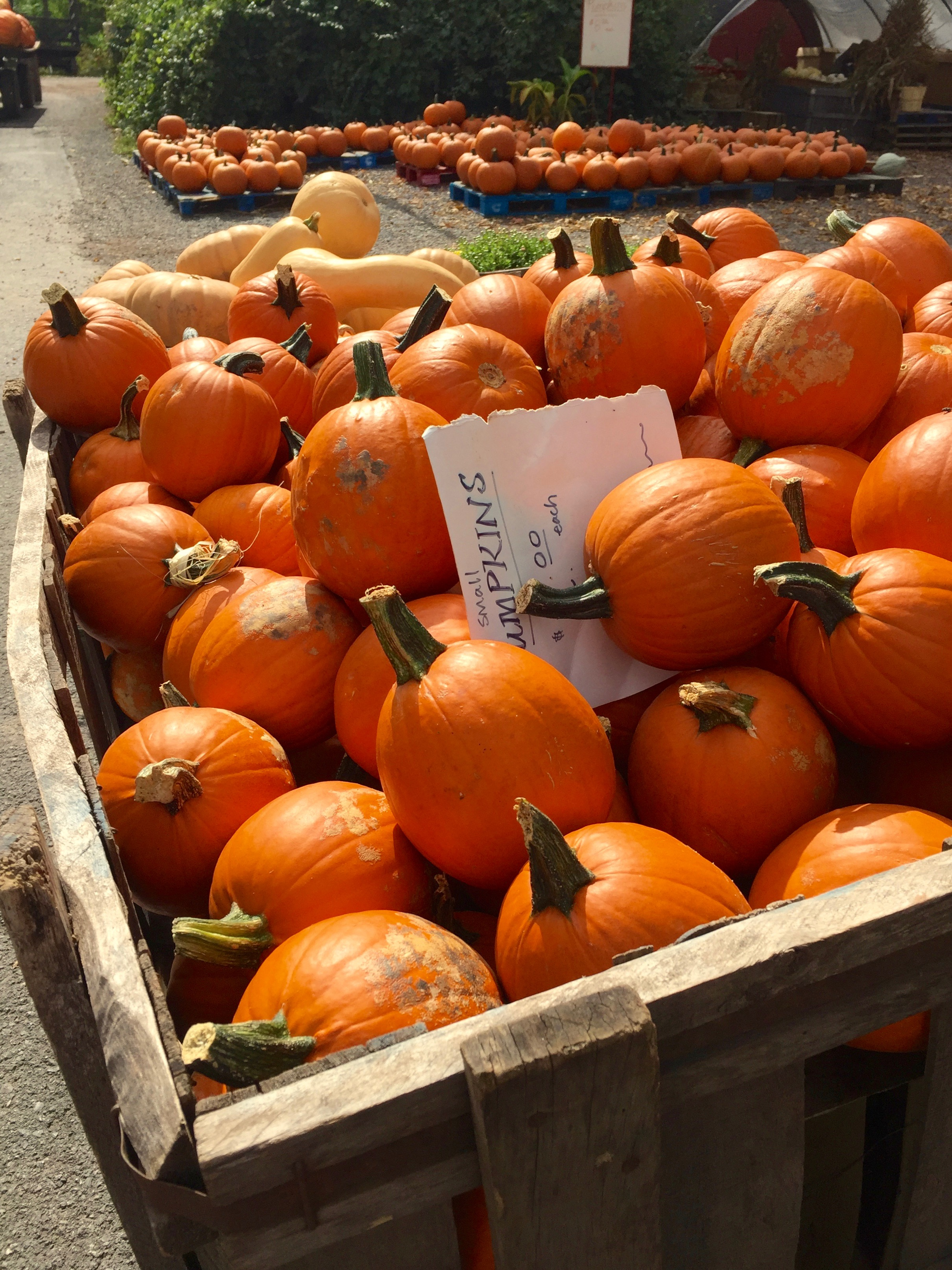 story farms catskill pumpkins