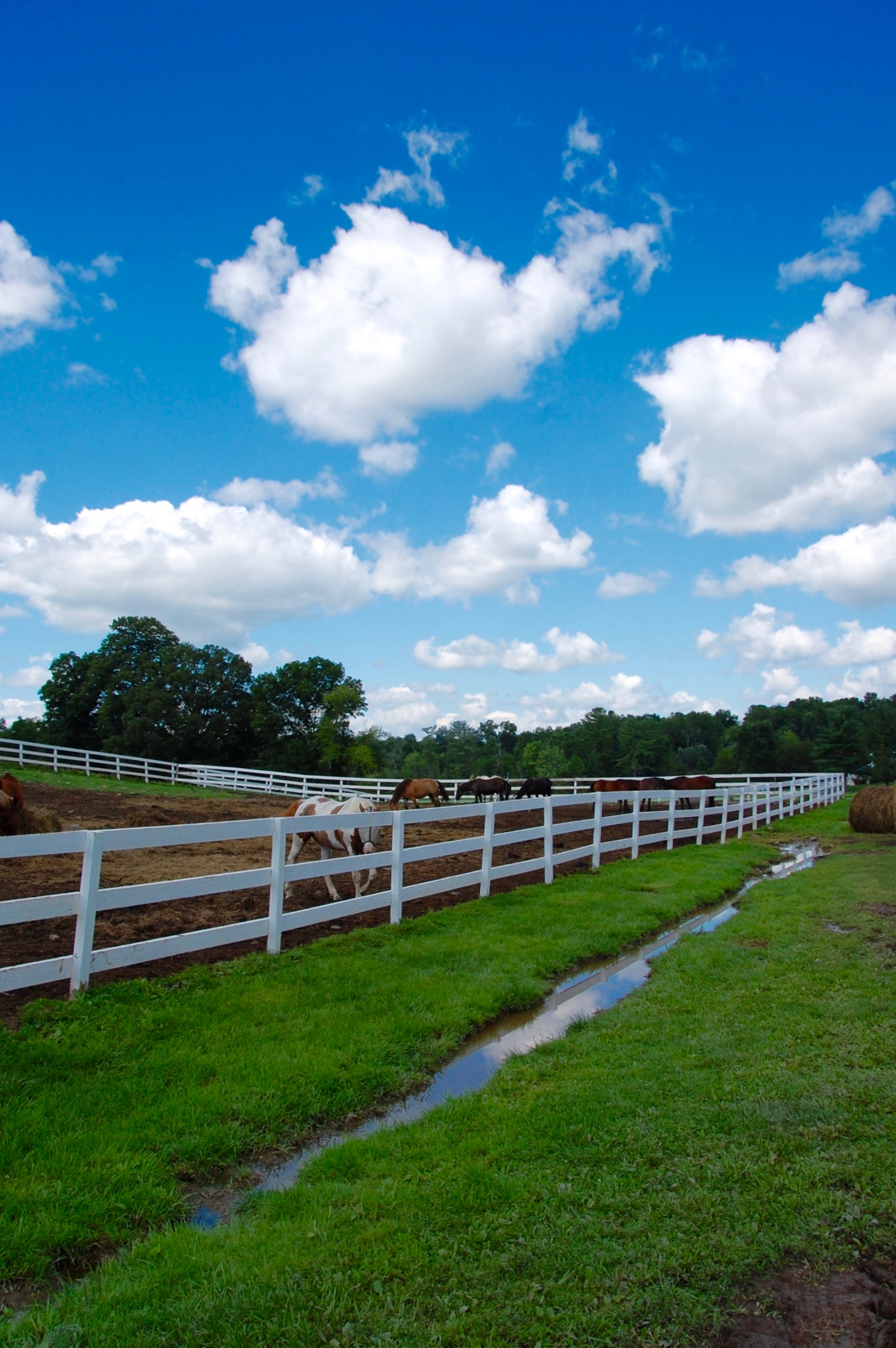 K&K Equestrian : The prettiest place for a pony ride or horseback riding