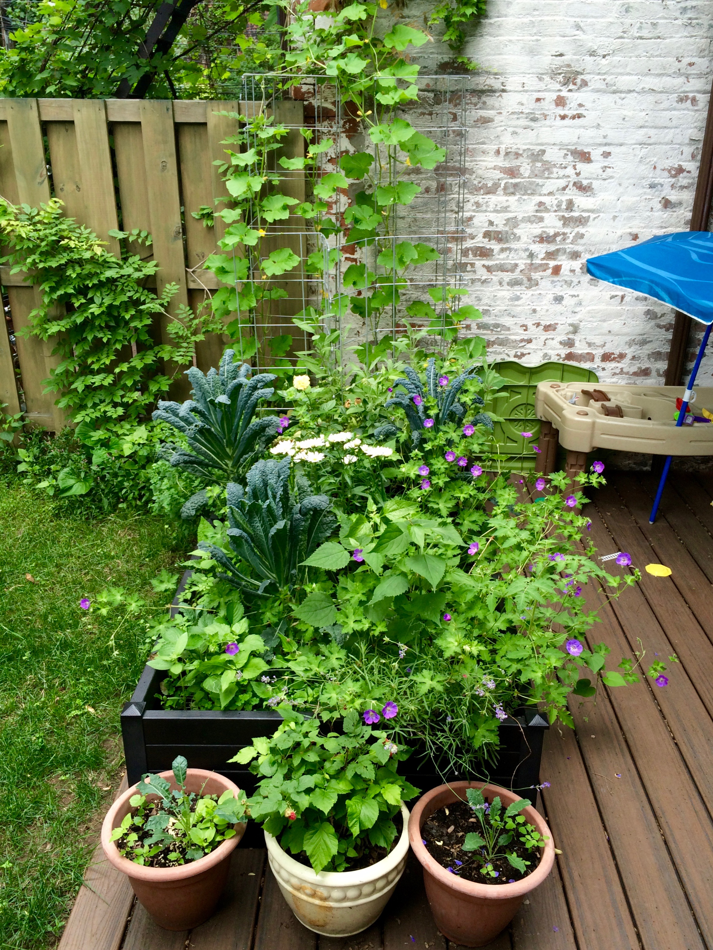 The best self-watering beds for a square foot garden:  Terrazza Raised Beds  in full bloom!
