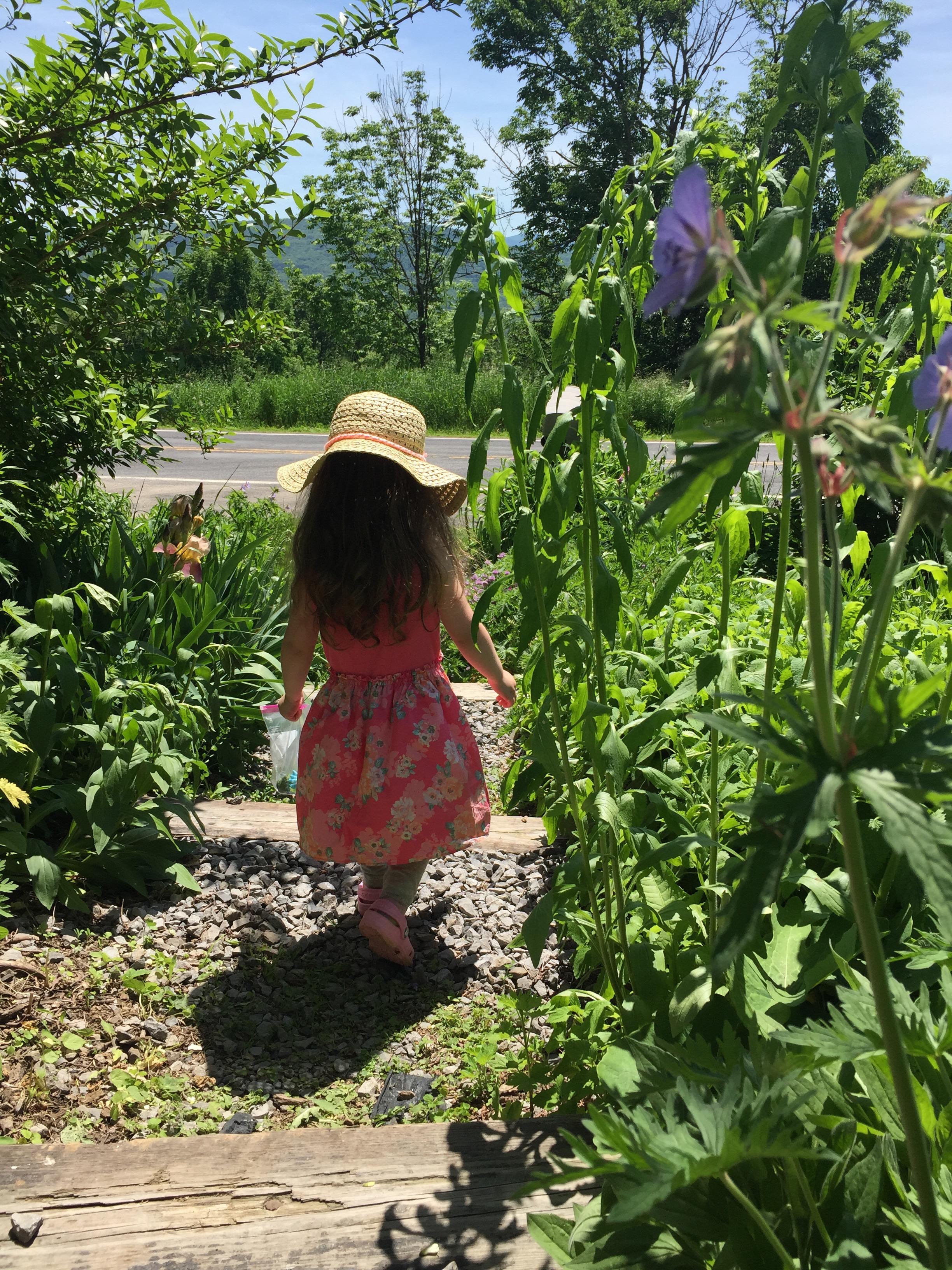 Toddler-tall flowers at Heather Ridge Farm
