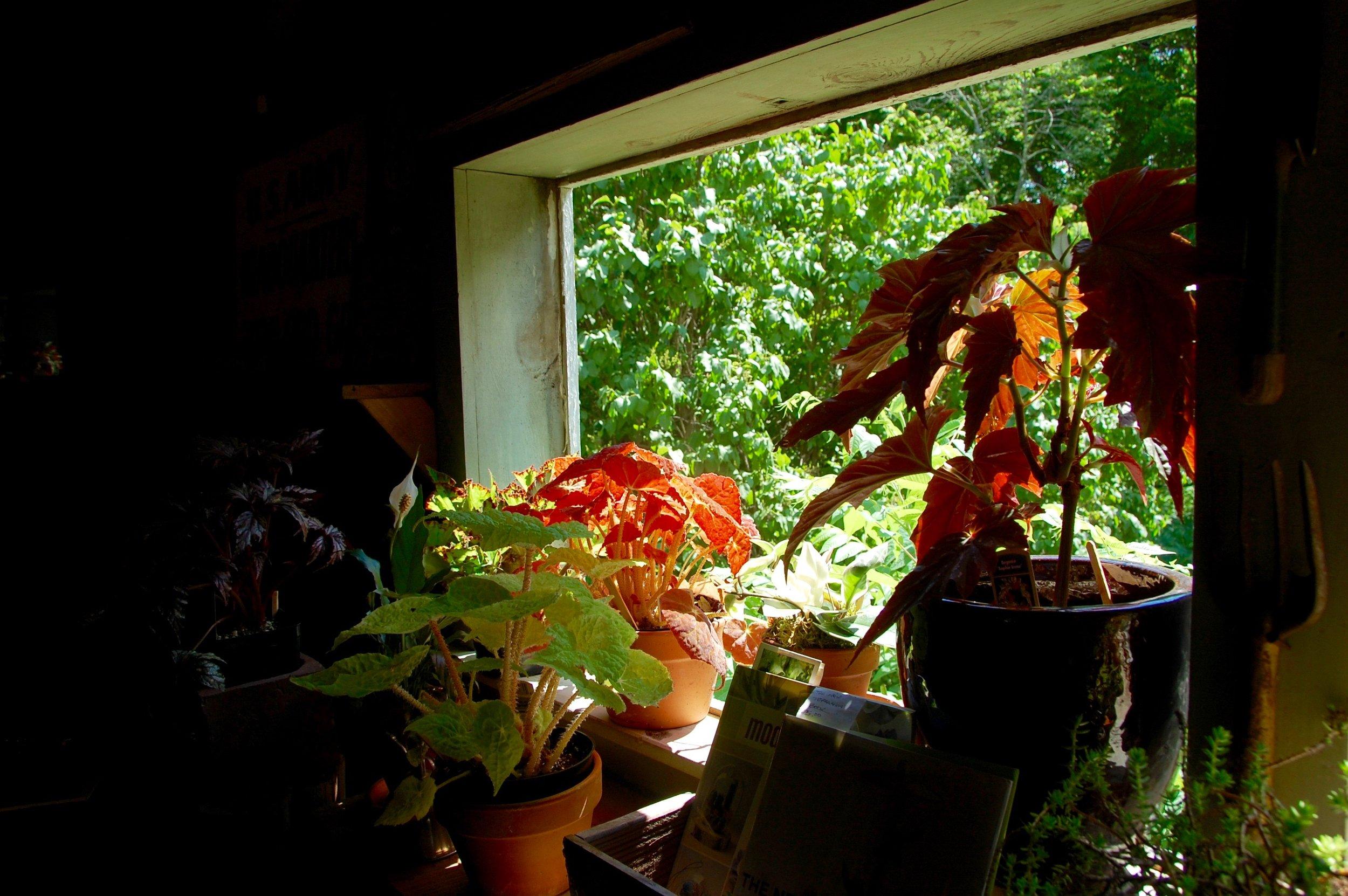 plant store oak hill