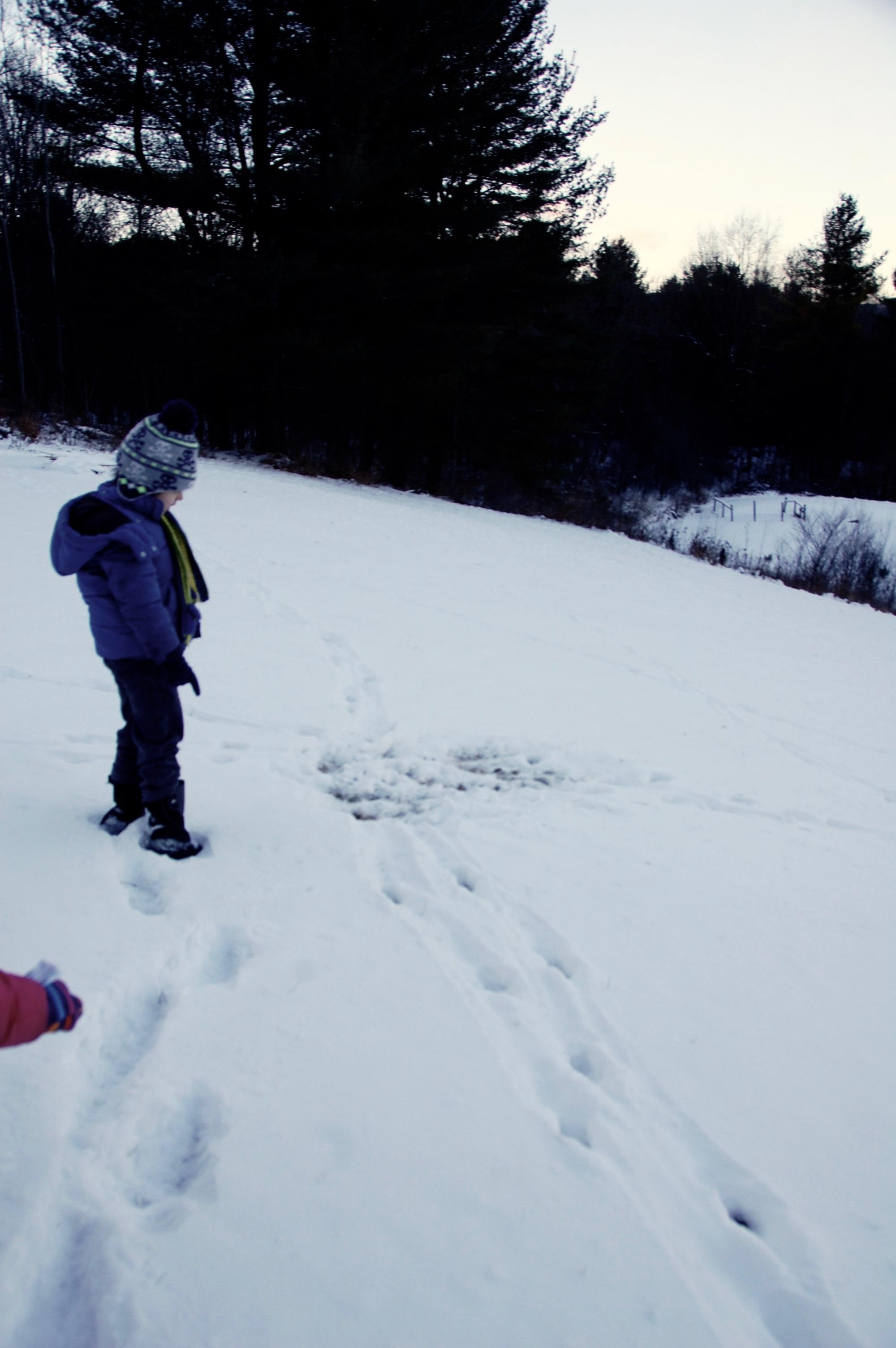 animal tracks in snow converge
