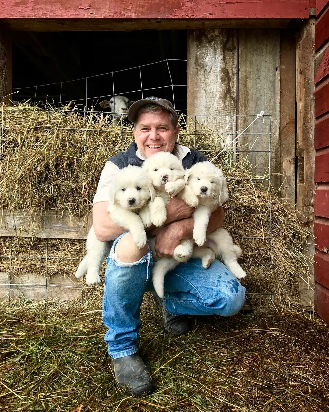 Lime Kiln Farm Local Italian Style Cheese And Adorable Italian Sheepdog Puppies Brooklyn Doublewide