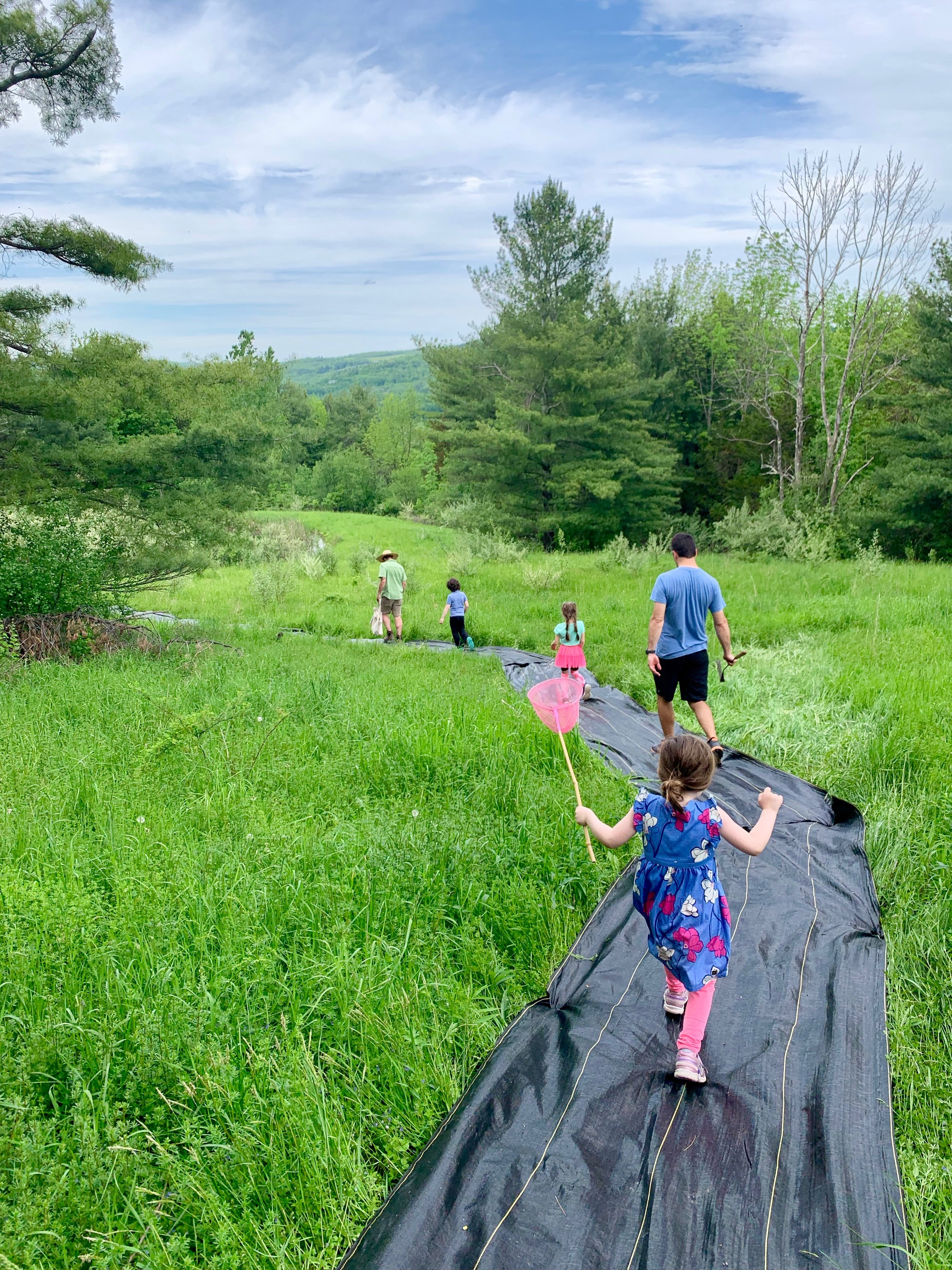 Making a nature trail with landscape fabric