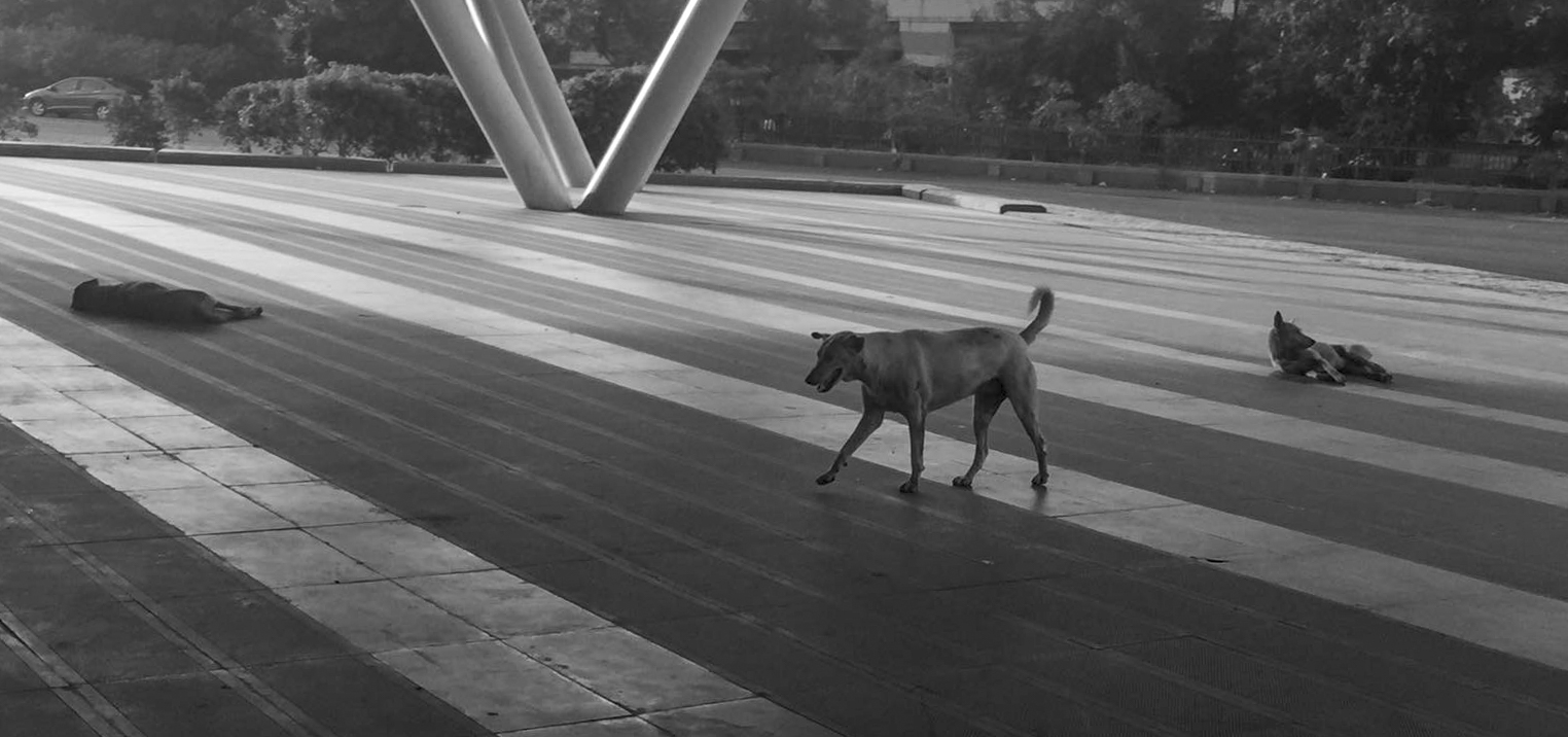 Stray dogs. They  can  be scary,when they bark and run at you spontaneously!