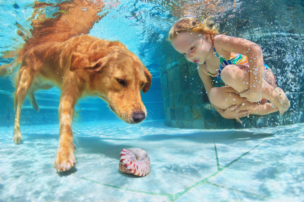 Let your favorite pooch enjoy the end of summer with a dip in the pool!