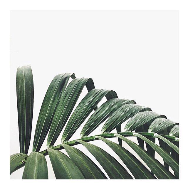 we believe in green. 🍃🎍 . #aradebeauty
