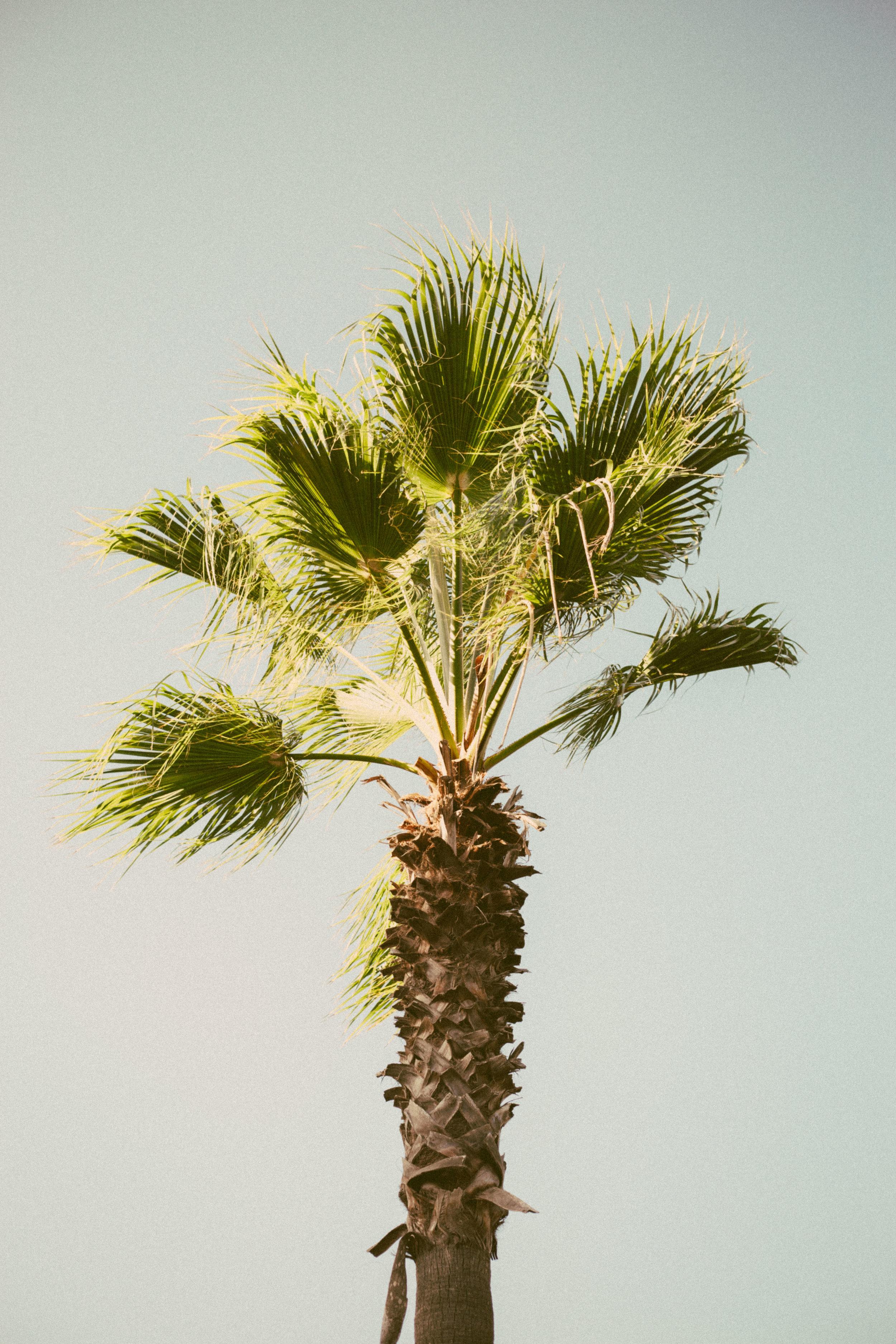 Mallorca-3.jpg