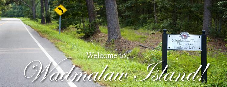 Welcome to Wadmalaw Island