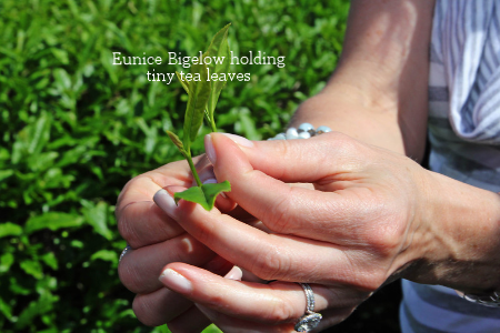 Eunice Bigelow holding tiny tea leaves