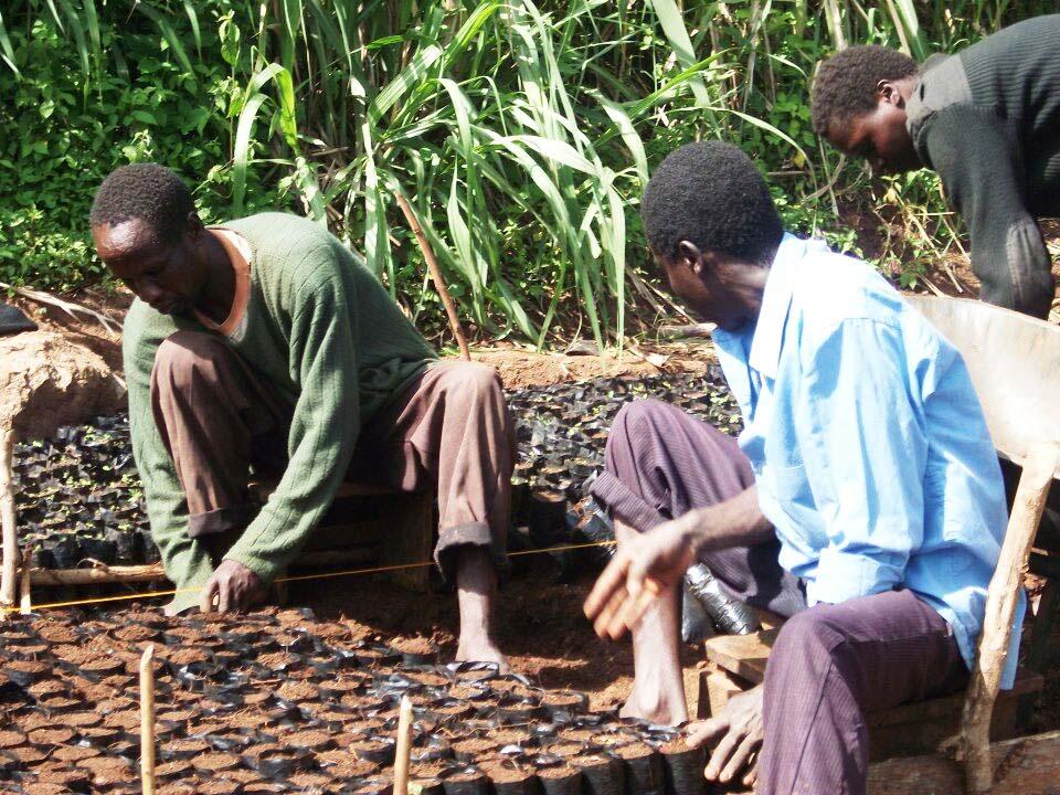 Growing Trees in Kenya copy.jpg