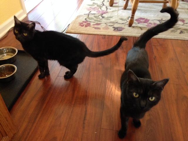 Somebody say kitty treats?
